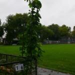 Kaminiarz/Bomford, end of September